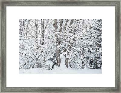 The Tree- Framed Print