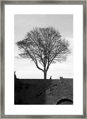 The Tree Framed Print by Jez C Self
