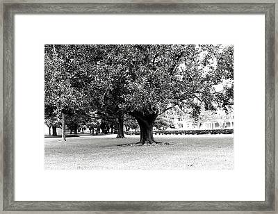 The Tree Of Life Framed Print by Gracey Tran