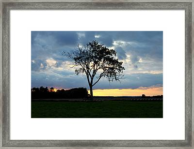 The Tree Of Life Framed Print by Mark  France