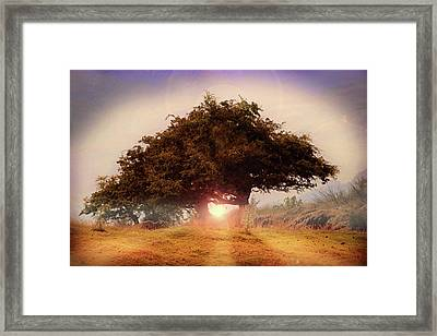 The Tree Of Light Framed Print by Martin Newman