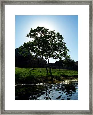 The Tree Of Toho Framed Print
