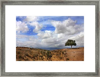 The Tree Of Wisdom Framed Print by Martina  Rathgens