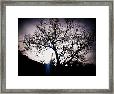 The Tree Of Wisdom Framed Print