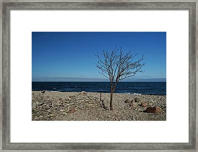 The Tree On Baltic See Beach Framed Print