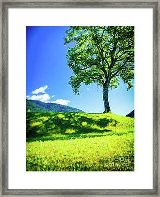 Framed Print featuring the photograph The Tree On The Hill by Silvia Ganora