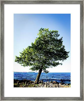 Framed Print featuring the photograph The Tree by Onyonet  Photo Studios