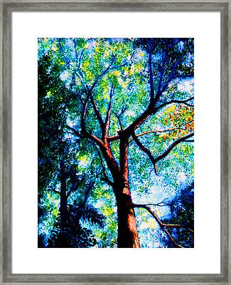 The Tree Framed Print by Stan Hamilton