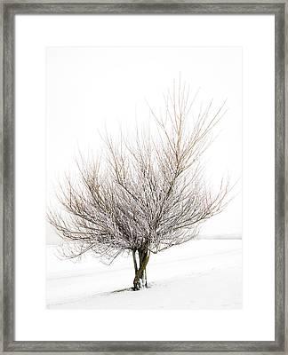 The Tree Framed Print by Svetlana Sewell