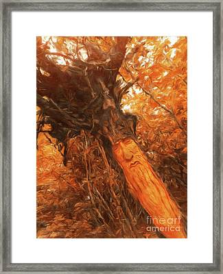 The Tree Wizard By Sarah Kirk Framed Print