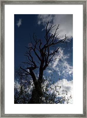 The Treeness Of A Tree Framed Print by Eva Maria Nova