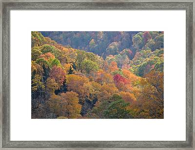 The Trees Of Autumn On The Blue Ridge Framed Print