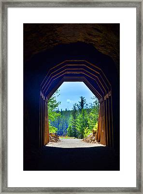 The Trees Of Myra Canyon Framed Print