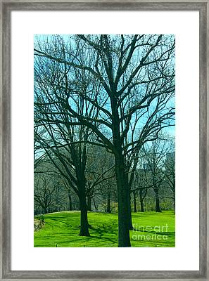 The Trees Framed Print by Terry Wallace