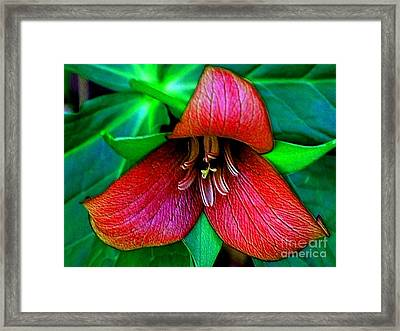Framed Print featuring the photograph The Trillium by Elfriede Fulda
