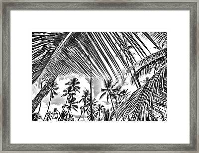 Framed Print featuring the photograph The Tropics by DJ Florek