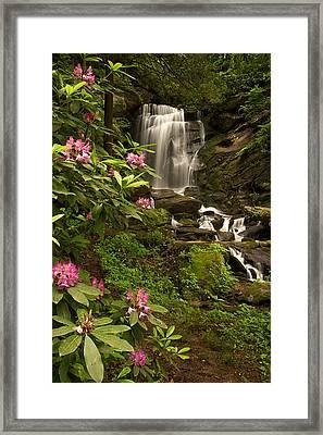 The Tropics Of North Carolina Framed Print