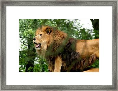 The True King Framed Print by ShadowWalker RavenEyes Dibler