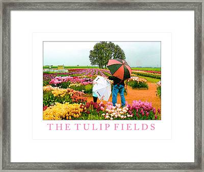 The Tulip Fields Framed Print by Margaret Hood