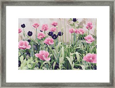 The Tulip Garden Framed Print by Jeannie Rhode