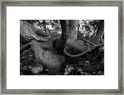 The Twist Framed Print by Brent L Ander