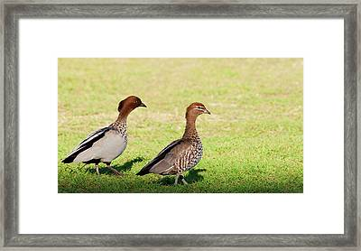 The Two Of Us Framed Print by Heather Thorning