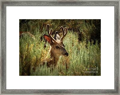 The Two Point Framed Print by Robert Bales