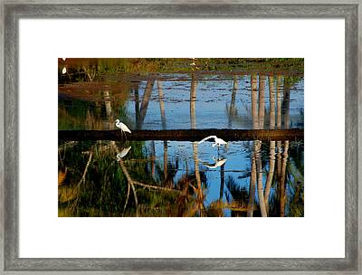 The Two Sides Framed Print by Farah Faizal