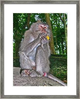 The Ubud Monkey Forest. Bali. Framed Print by Andy Za