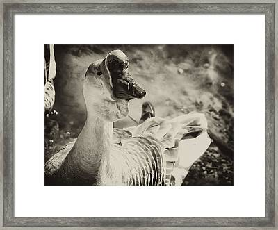 The Ugly Duckling Framed Print by Bill Cannon