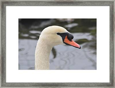 The Ugly Duckling Framed Print by Richard Andrews
