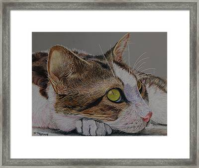 The Ultimate Pose Framed Print by Don MacCarthy