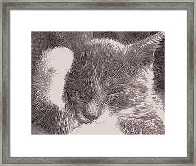 The Unbearable Cuteness Of Kitten Framed Print by Susan Maxwell Schmidt