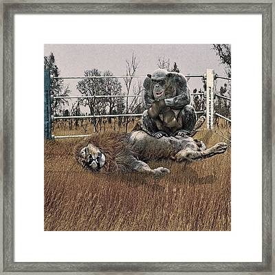 The Undefeated Chump Framed Print