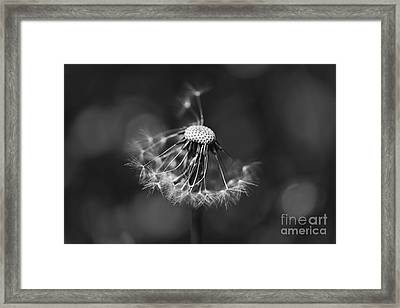 The Underrated Dandelion 2 Framed Print