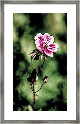 Framed Print featuring the photograph The Unknown Weed by Onyonet  Photo Studios