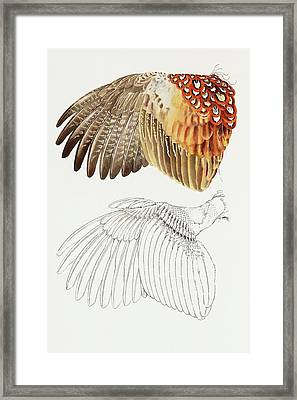 The Upper Side Of The Pheasant Wing Framed Print by Attila Meszlenyi