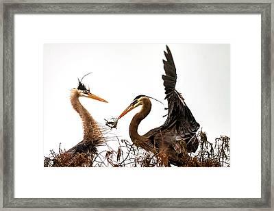 The Valentine's Gift Framed Print