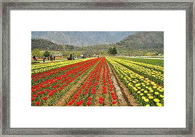 The Valley Blooms Framed Print
