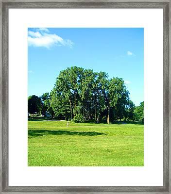 The Vastness Of Cottonwoods Framed Print