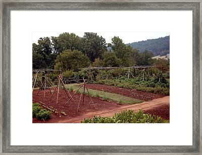 The Vegetable Garden At Monticello II Framed Print by LeeAnn McLaneGoetz McLaneGoetzStudioLLCcom