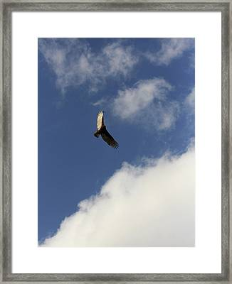 Framed Print featuring the photograph The View  by Kim Henderson