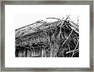 The Vines Awaken Framed Print