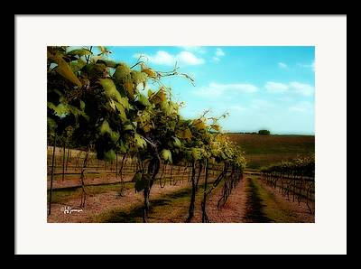 Silver Hills Winery Framed Prints