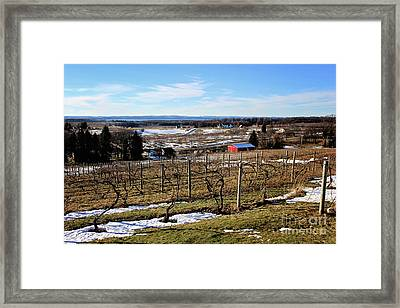 The Vineyard On Old Mission Framed Print