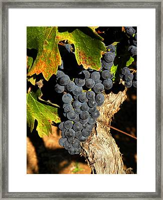 The Vineyard One Framed Print