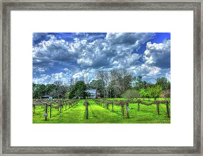 The Vineyard Vines Landscape Photography Art Framed Print by Reid Callaway