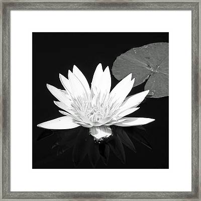 The Vintage Lily II Framed Print