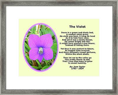 The Violet Classical Wildflower Nature Poetry By Jane Taylor Framed Print by Maxwell