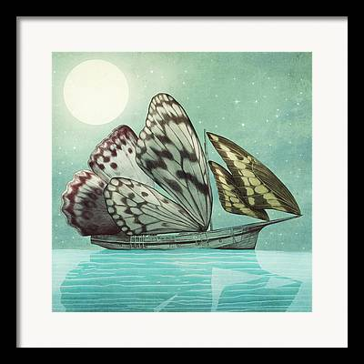 Butterfly Drawings Framed Prints